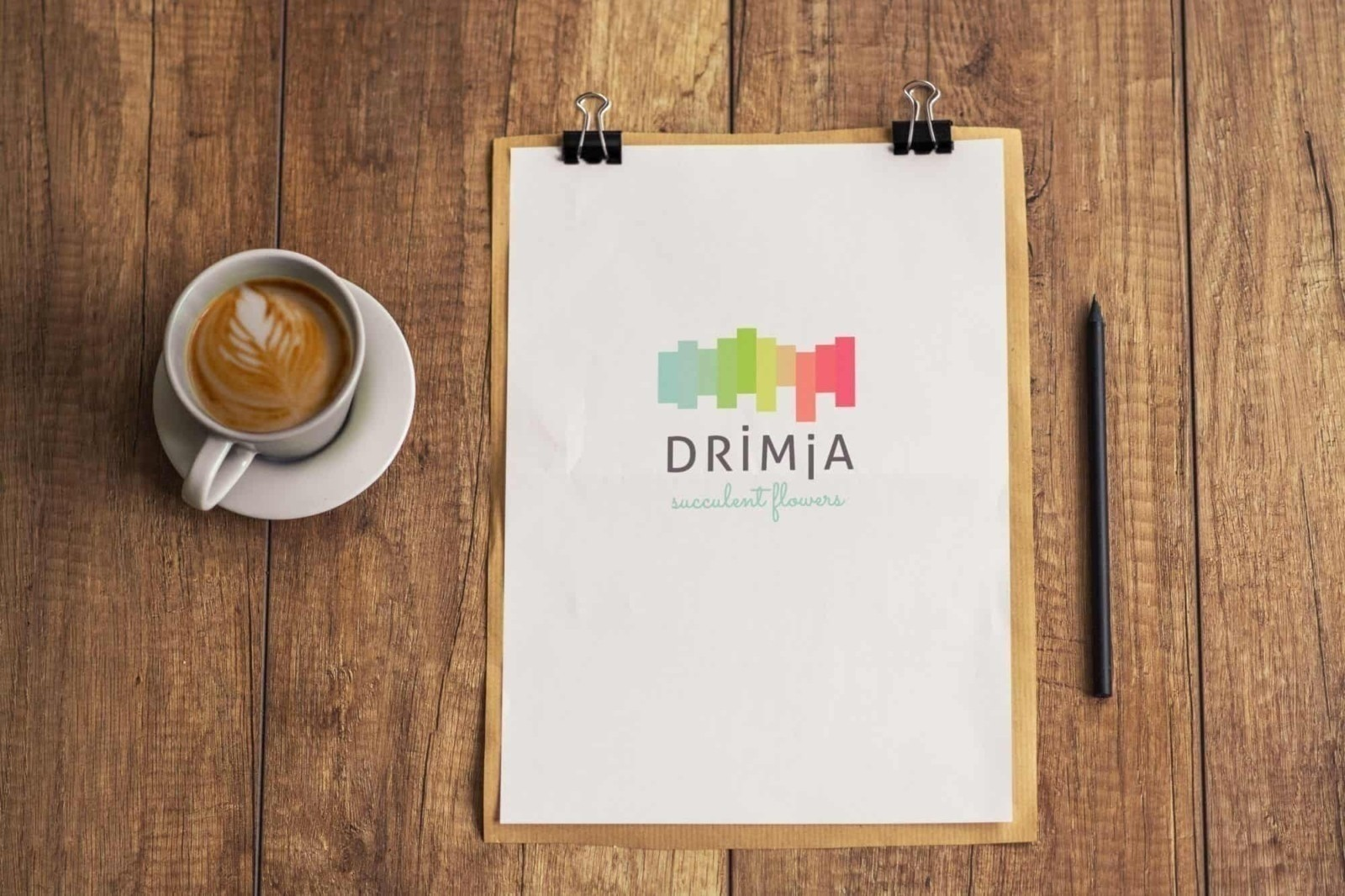 Drimia, brand identity process, suculent flowers, branding